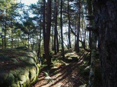 forêt de fontainebleau rocks and trees