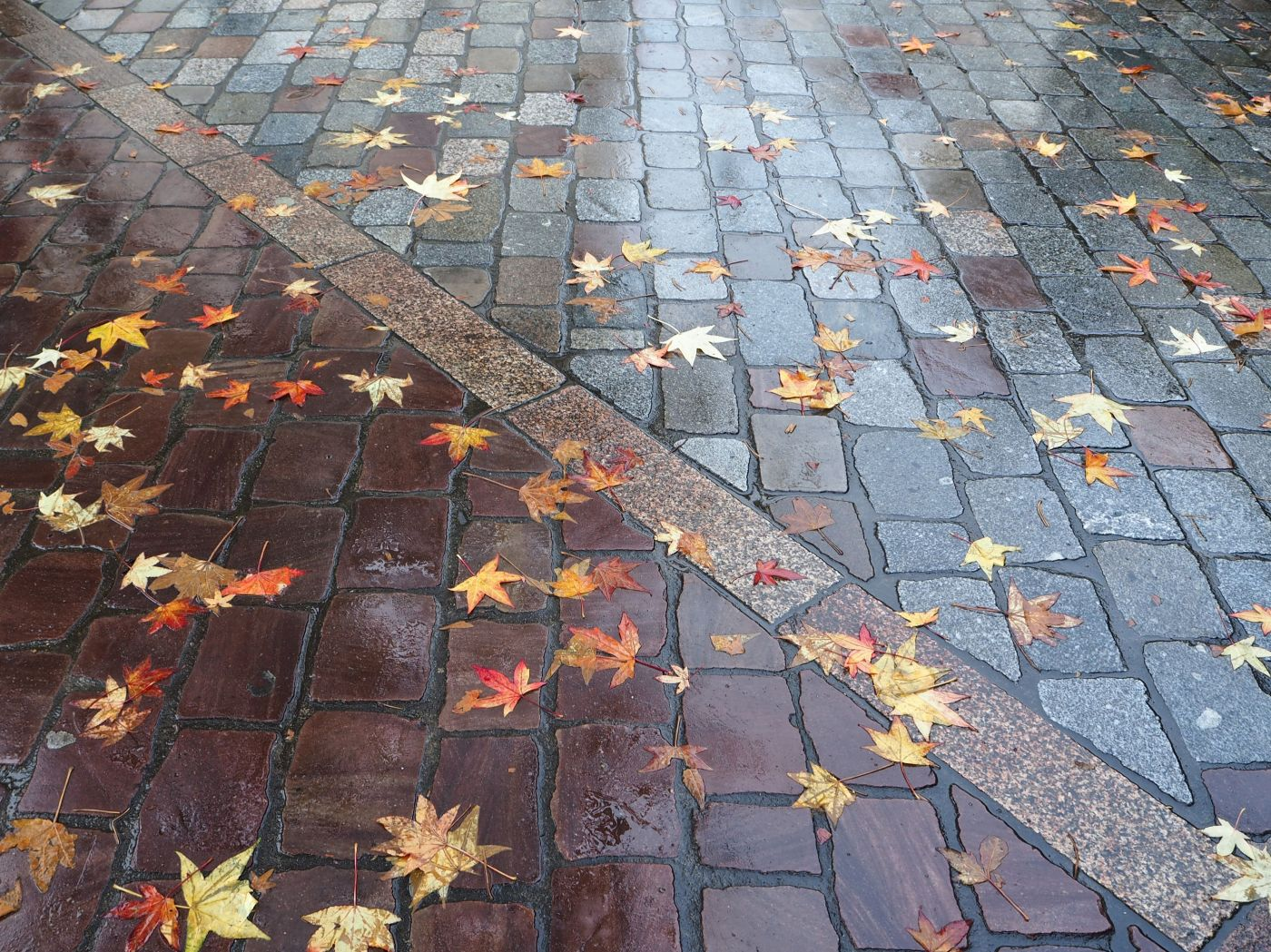 leaves on wet stone paving