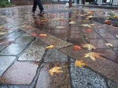 Leaves on wet paving - October 2017