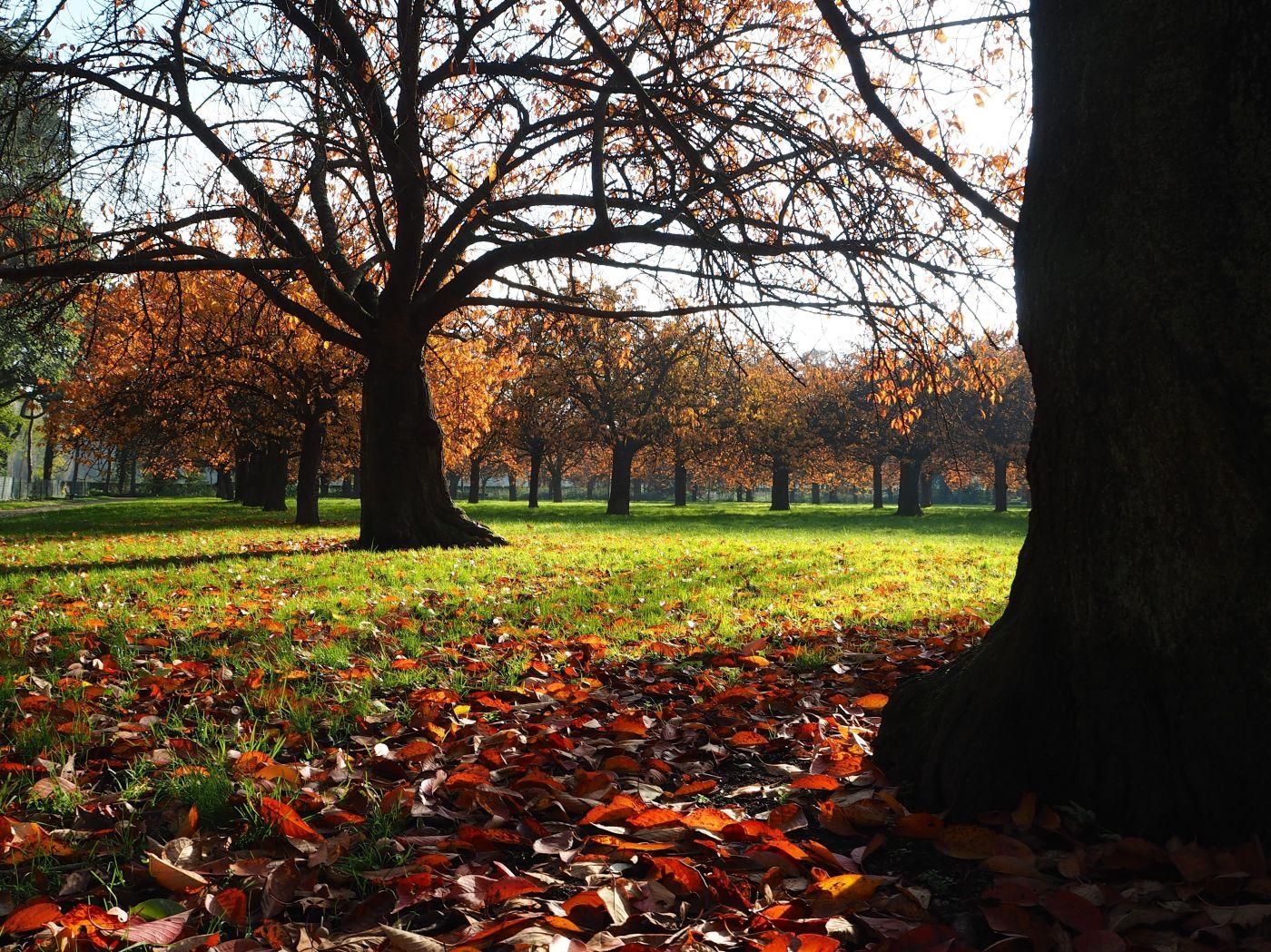 parc de sceaux cerisiers automne