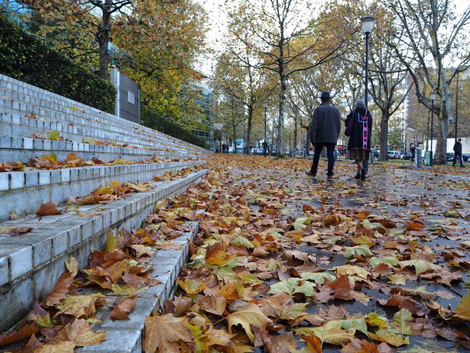 autumn leaves boulevard port royal paris