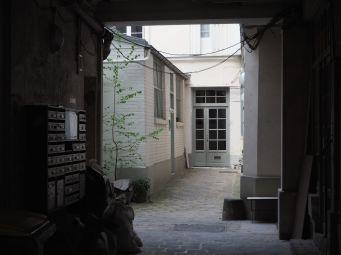 Self-sown sapling in a Marais courtyard