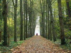 avenue parc de sceaux autumn