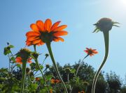 Reaching for the sun in the Jardin des Plantes - September 2016