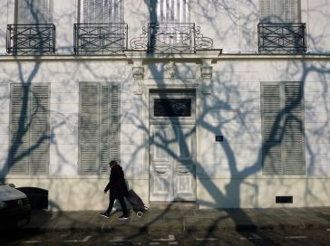 A shadow portrait of a leafless, winter tree - Paris, February 2018
