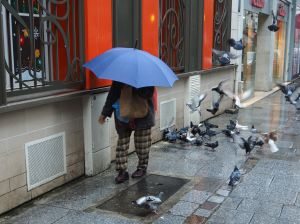 wet day pigeon feeder paris