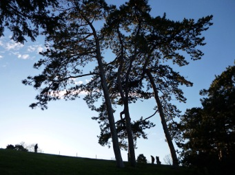 Pine trees on high ground in Parc des Buttes-Chaumont - March 2018