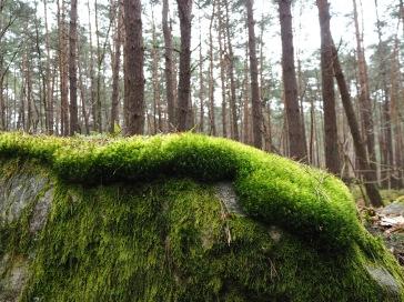 Fontainebleau moss - April 2018