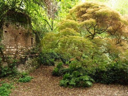 The naturalistic garden contains many exotic species including a wide variety of Japanese maples