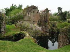 The ruins of the medieval corn mill, draped in wisteria
