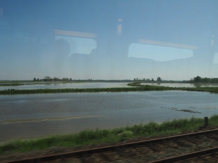 Rice fields flooded to irrigate the newly sown crop