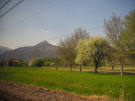 Spring green grass with fruit trees in blossom...