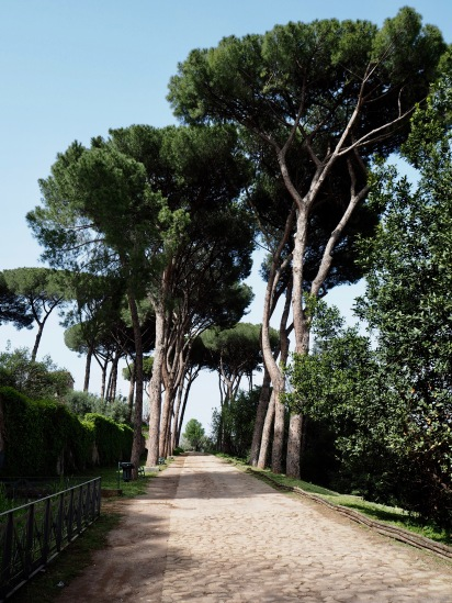 Umbrella pines are a distinctive feature of the Rome landscape and a valuable source of shade