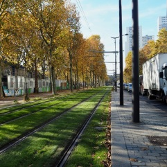 Tree-lined tram lines - Paris 13