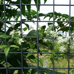 A mesh barrier softened by trailing stems - Paris 12