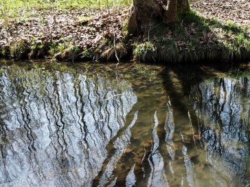 Woodland reflections