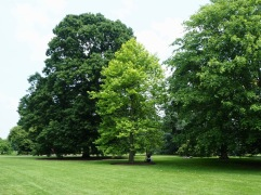 The Arboretum stretches across two thirds of the gardens and includes 14,000 trees of 2,000 different species and varieties