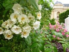 roses Jardin de Plantes Paris