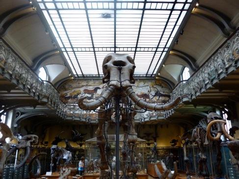 mammoth skeleton - Gallery of Comparative Anatomy Paris
