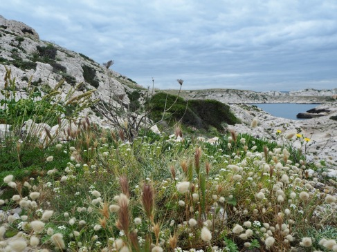 A sheltered slope colonised by a mixture of Wall Barley, Hare's Tail Grass and Alyssum