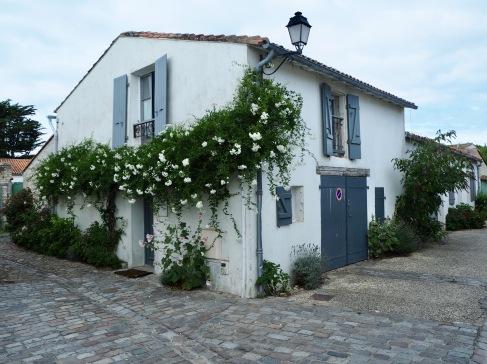 white solanum jasminoides St Martin de Ré