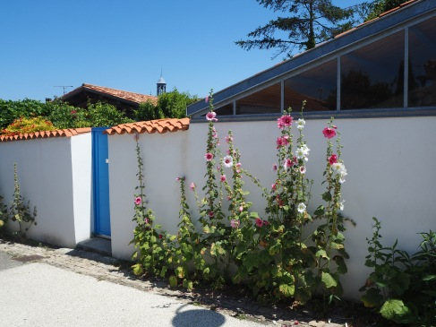 Hollyhocks in Angoulins - a village just south of La Rochelle