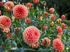 Dahlia season in the Parc Floral
