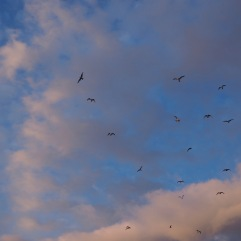 Sunset and seagulls at Spittal in June