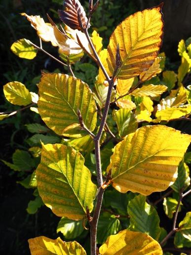 Autumn gold - October 2018