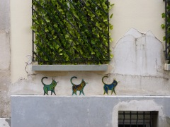 Is it coincidence that these cats blend with the colours of the artificial ivy?