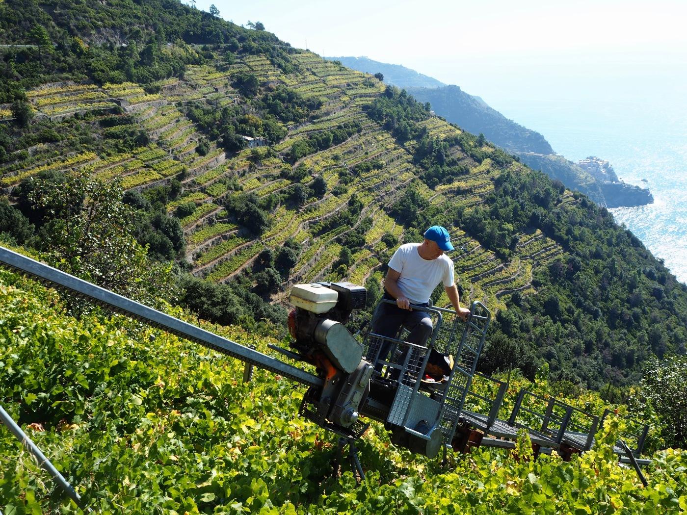 vineyard monorail cinque terre