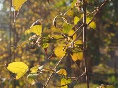 Autumn light through anonymous leaves