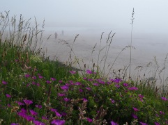 Cocklawburn beach - July