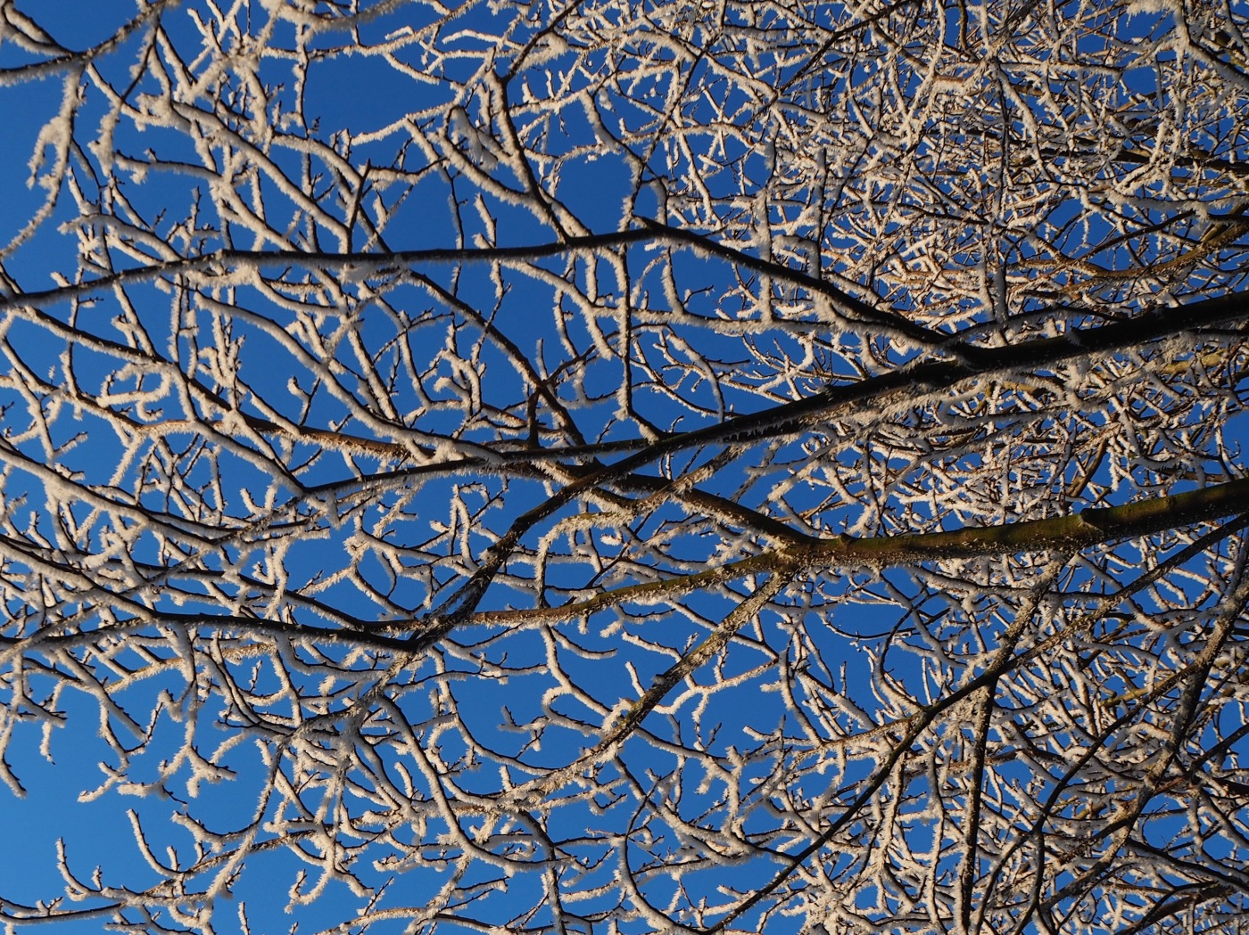 frosty branches blues sky