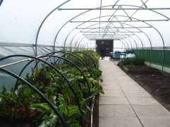 educational poly tunnel at Edinburgh Botanics