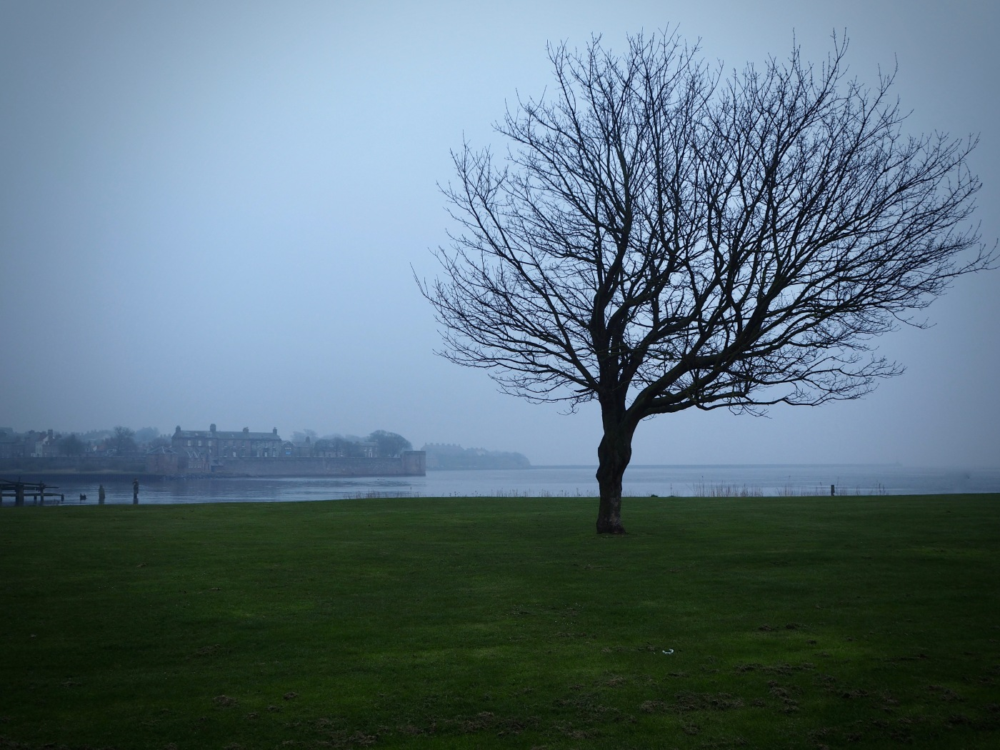 tree silhouette on misty day Berwick