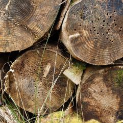 Stacked trunks colonised by wood boring beetles