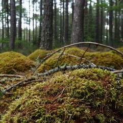 Cushioned moss boulders cover large areas of the forest floor