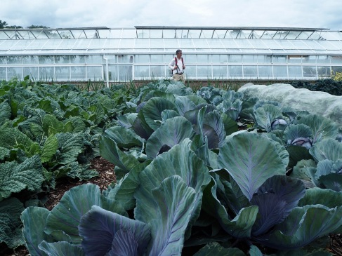 Green, formal and productive - the cabbage patch at Floors Castle - July 2019