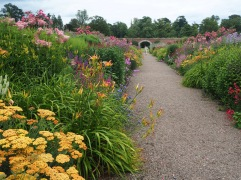 The soft yellow achilleas continue round the corner but in the next border orange and rust give way to shocking pink