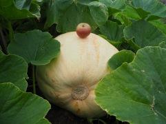 Apple and pumpkin - September