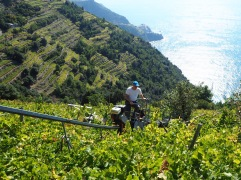 The precipitous line of a vineyard monorail tells a hair-raising story of cliffside cultivation - October 2018