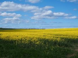 Northumberland fields - April 2020