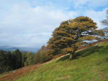 Thirty miles from home in the Scottish Borders - October 2020 - autumn colour, hills to climb for wonderful views...